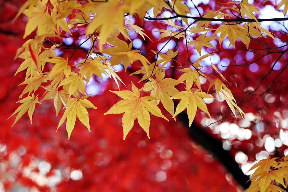 barvy podzimního listí