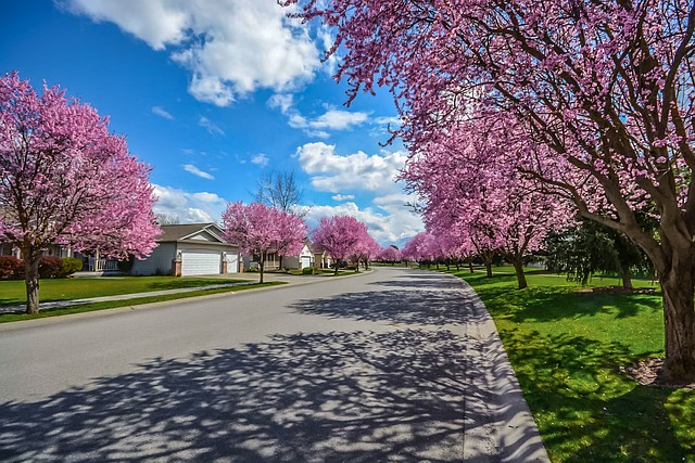 rozkvetlé stromy.jpg